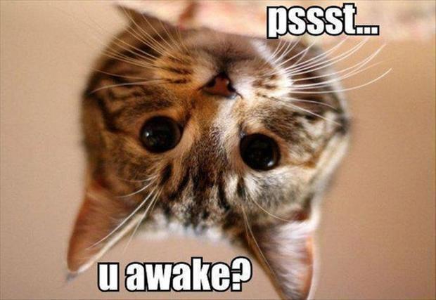 Very Funny Cat Photos 9 Desktop Wallpaper Wallpaper 620x427