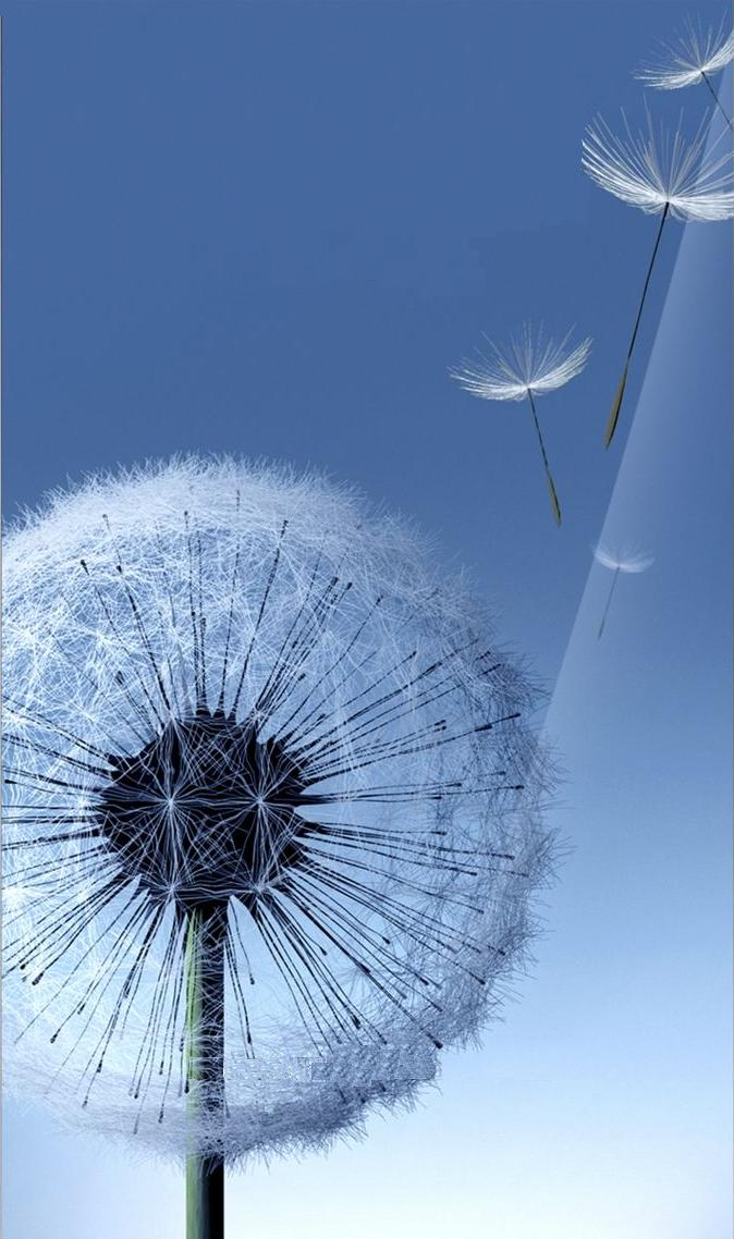 Galaxy SIII Dandelion Live Wallpaper ~ .