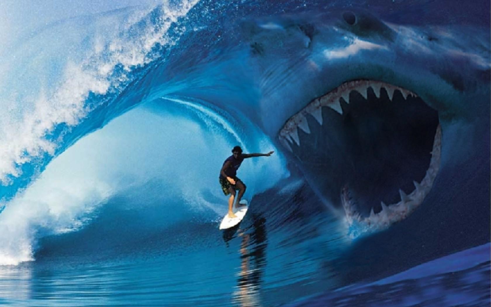 Shark Attack Wallpaper...
