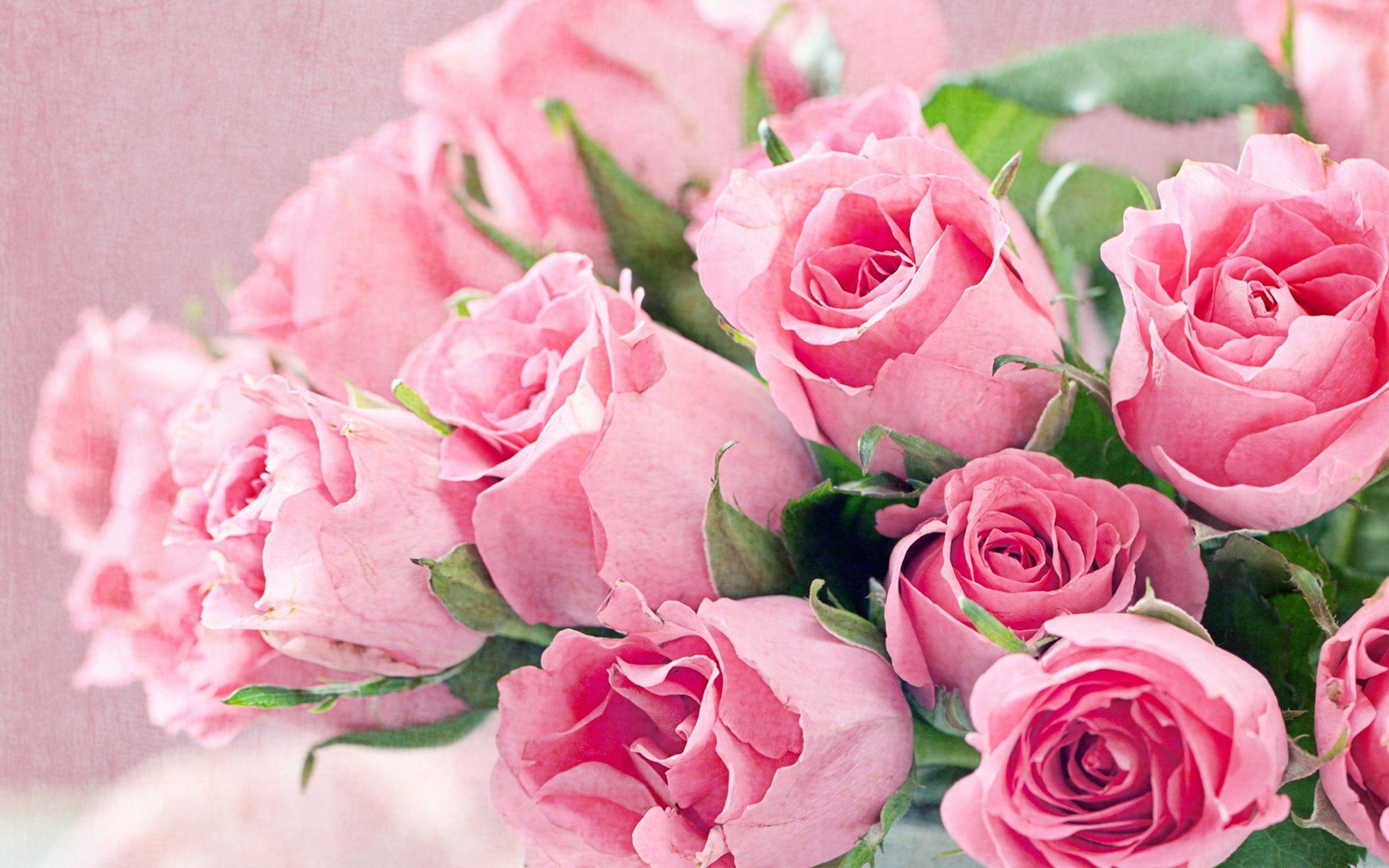Fresh Roses Pink Flowers Wllpaper HD Download For Desktop