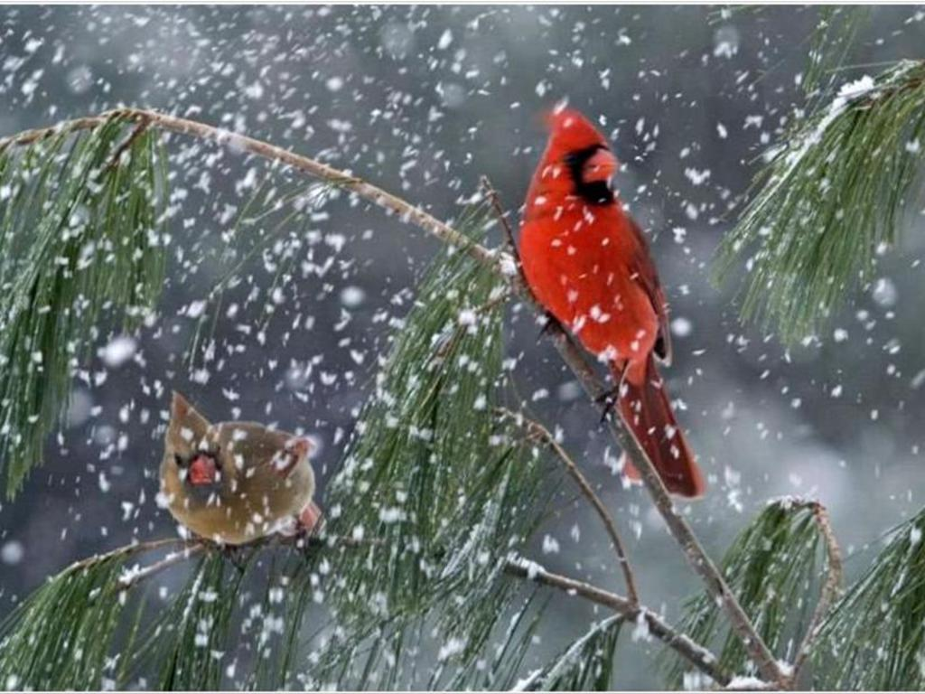 17116 wallpapers and screensavers birds 1024x768