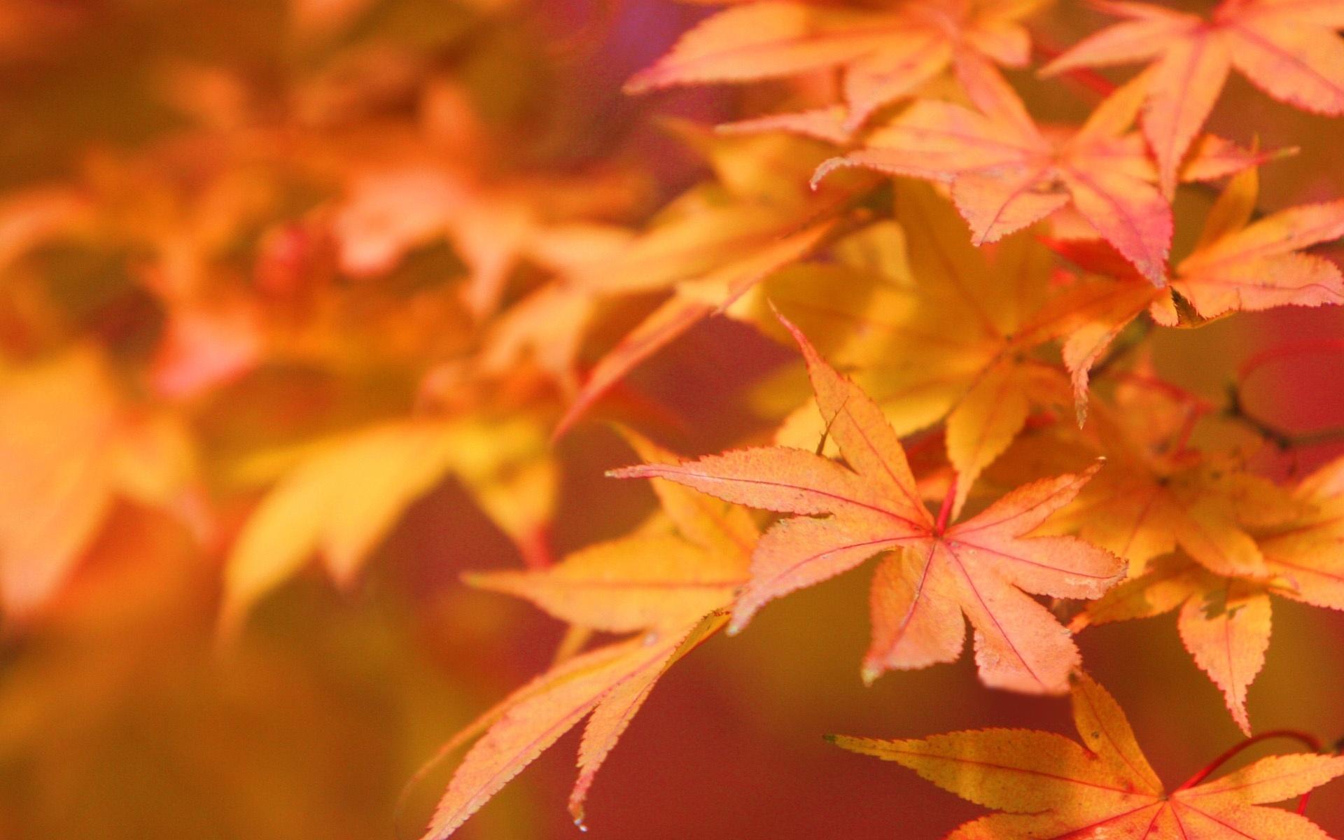 Autumn leaves   Autumn Wallpaper 22177663 1920x1200