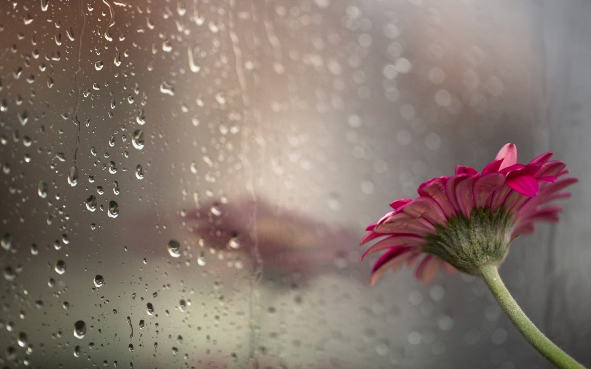 drops flower glass rain bokeh wallpaper background 1920x1200