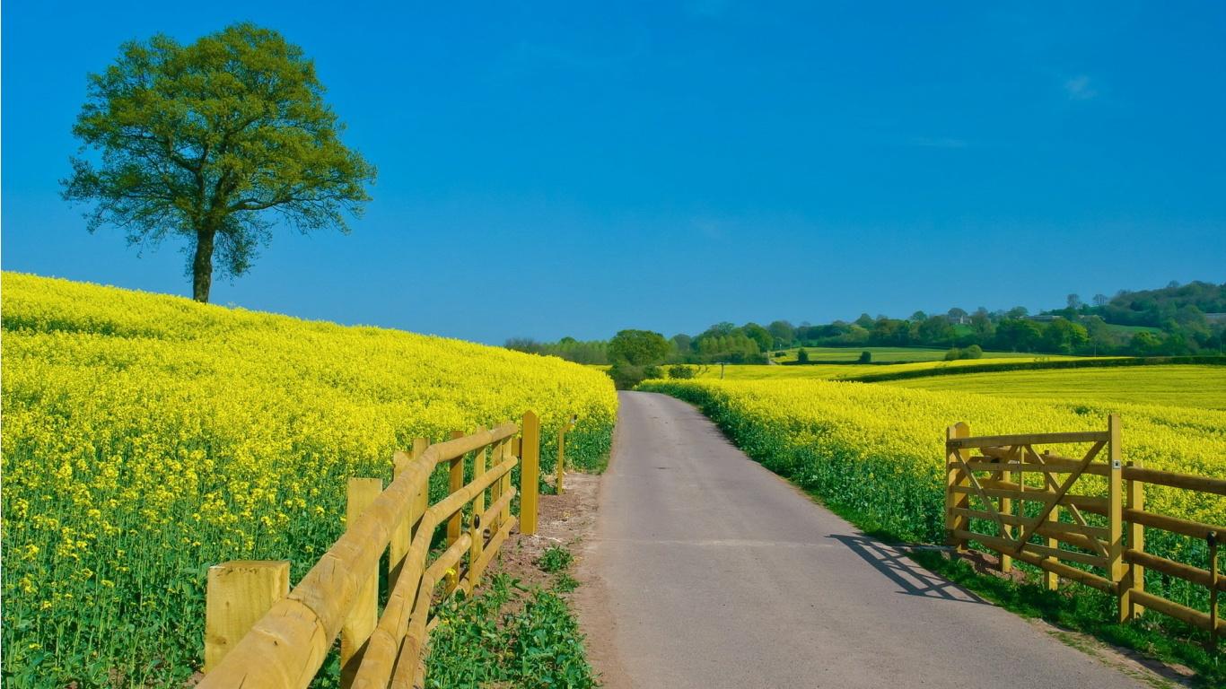 37] Beautiful Sunny Day Wallpaper on WallpaperSafari 1366x768