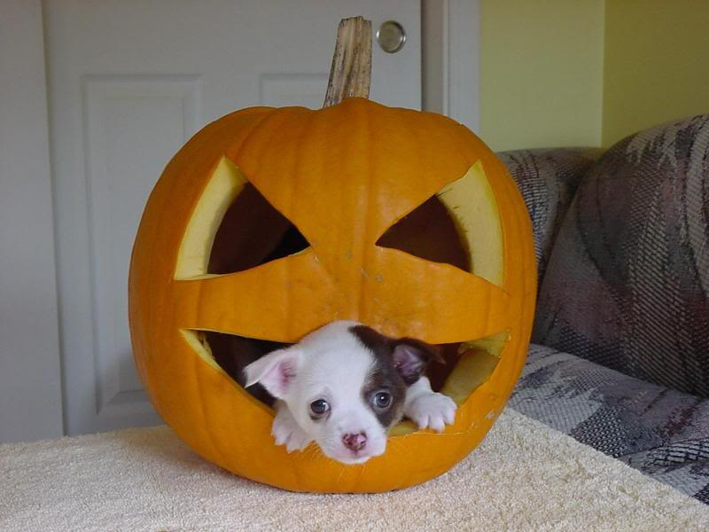 Pet Halloween Costumes For Cats