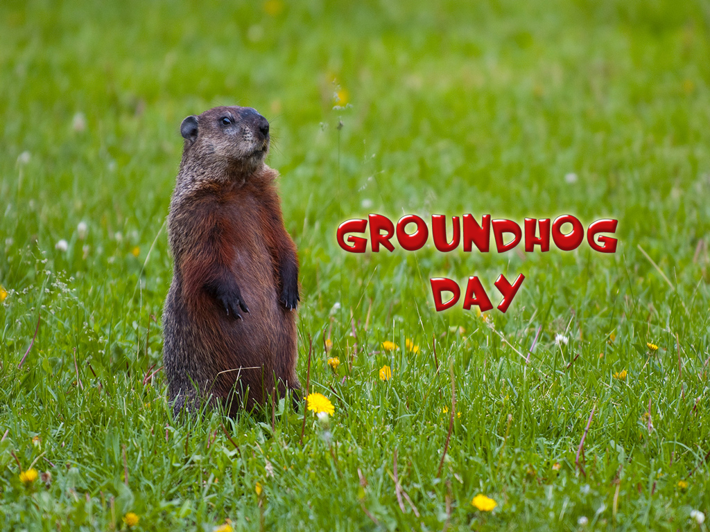 75] Groundhog Day Wallpaper on WallpaperSafari 1024x768