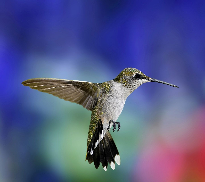 Exotic Bird Wallpaper