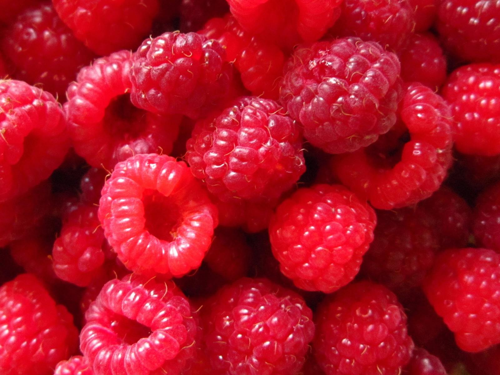 Tiny Plants Red Berry Wallpaper Wallpapersafari