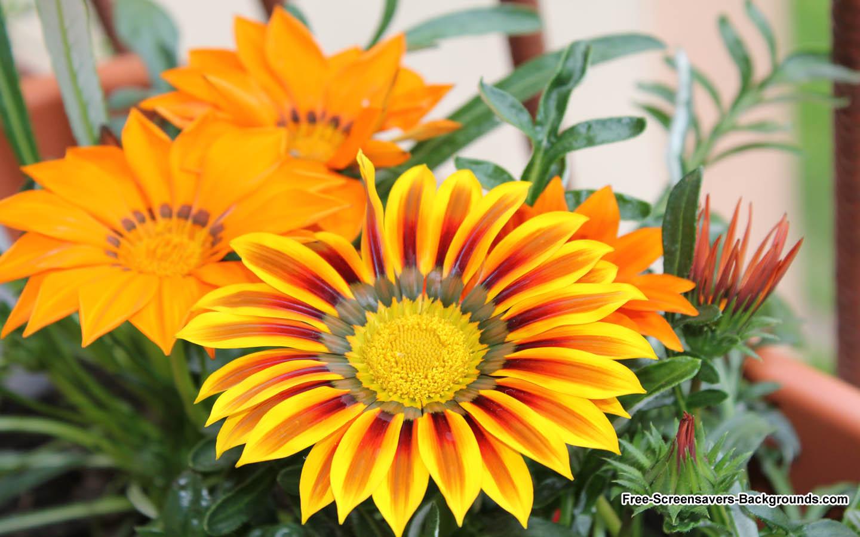 Free Screensavers Wallpaper Flowers Wallpapersafari