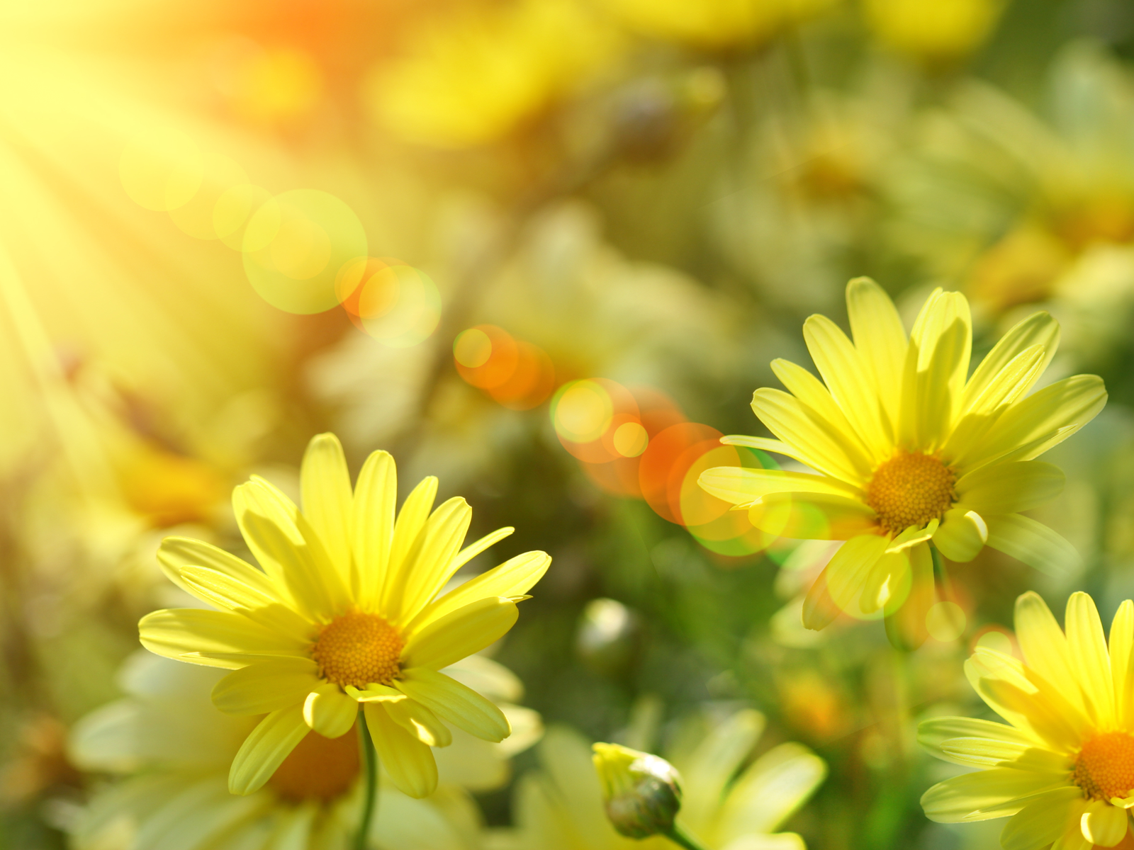 Sunshine Google Images Wallpaper Spring View Original 1600x1200