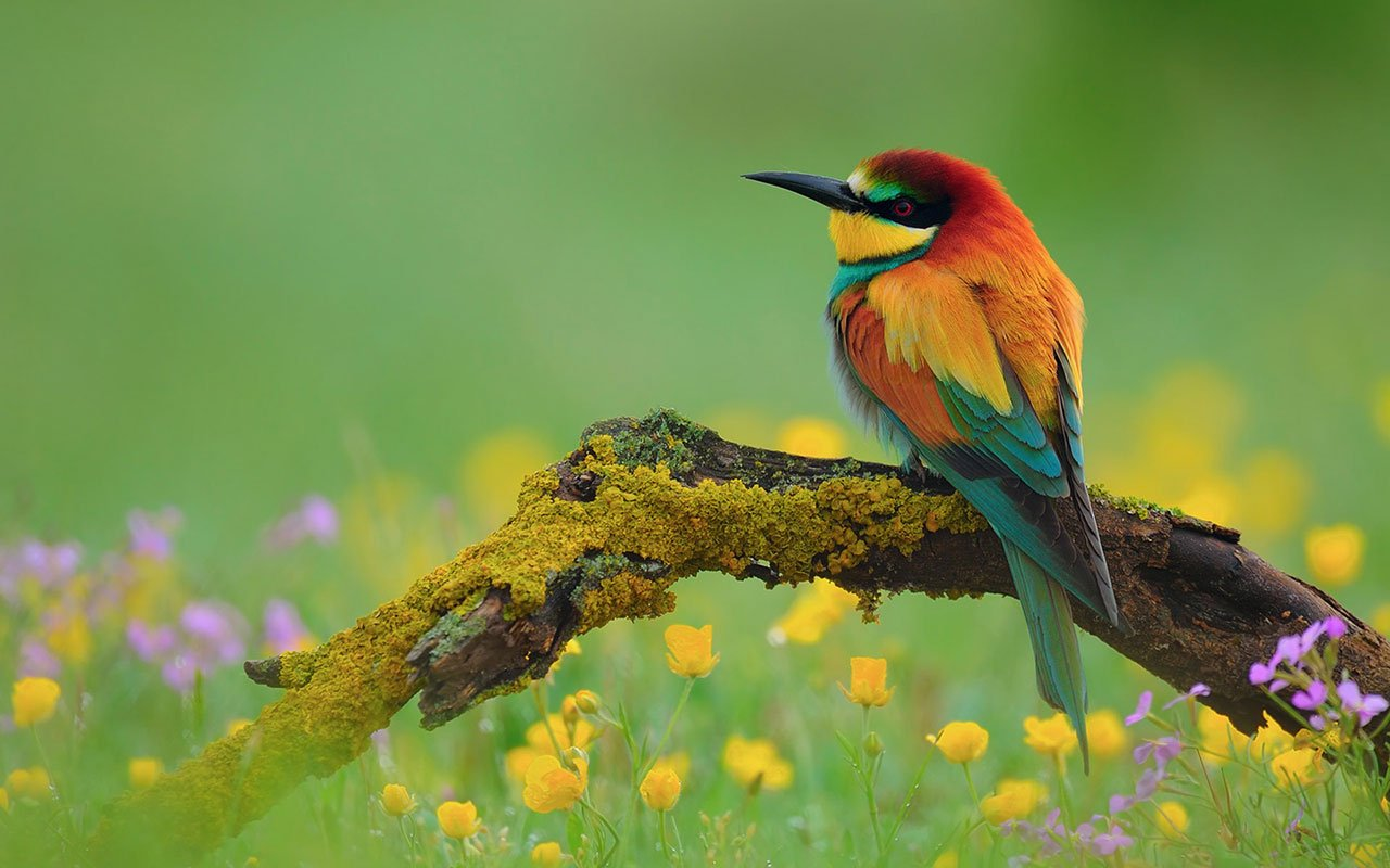 Lovely spring bird photography wallpaper 8 Animal Wallpapers 1280x800