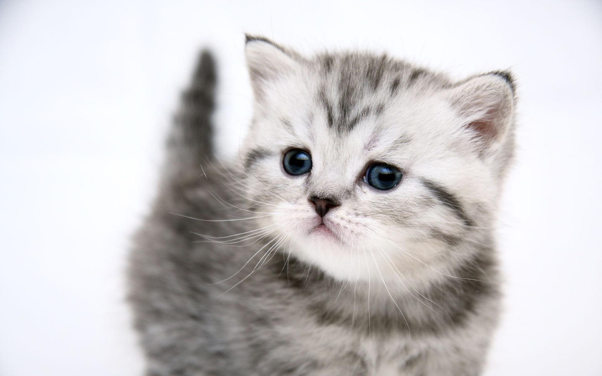 1920x1200 Small cute kitty desktop PC and Mac wallpaper