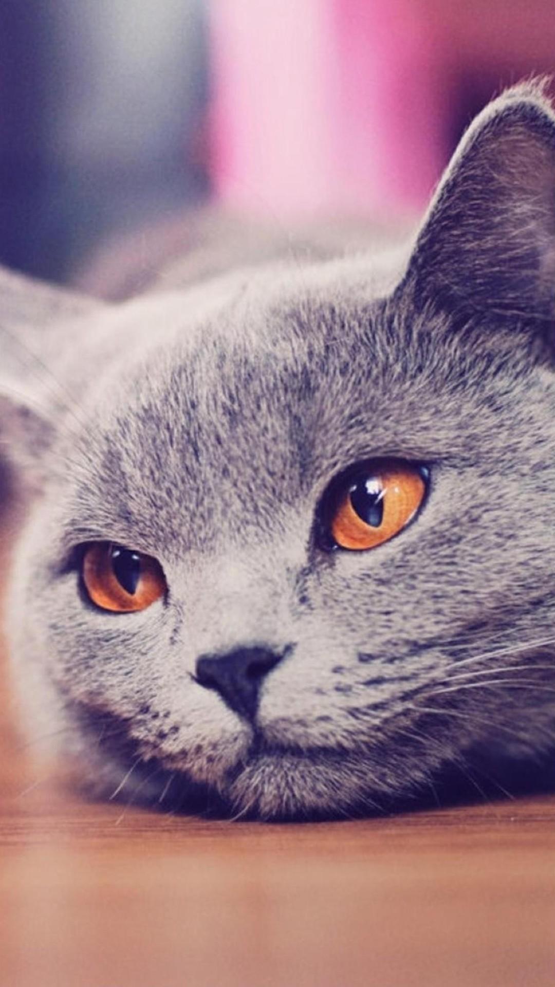1080x1920px Galaxy Cat Wallpaper Wallpapersafari