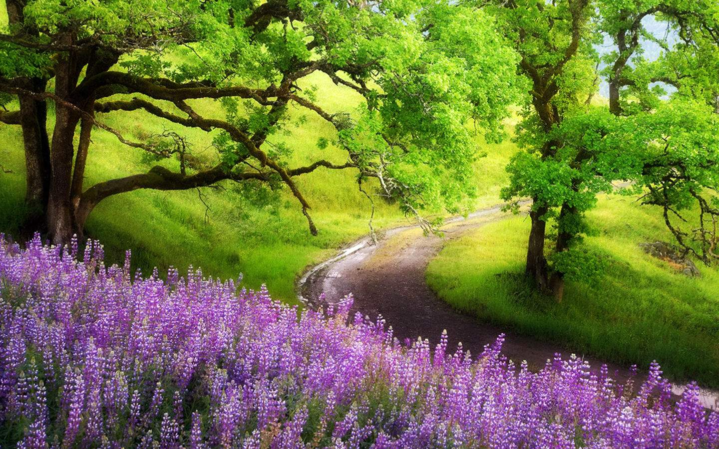 Free Download Landscape Purple Flowers Trees Wallpaper Landscape