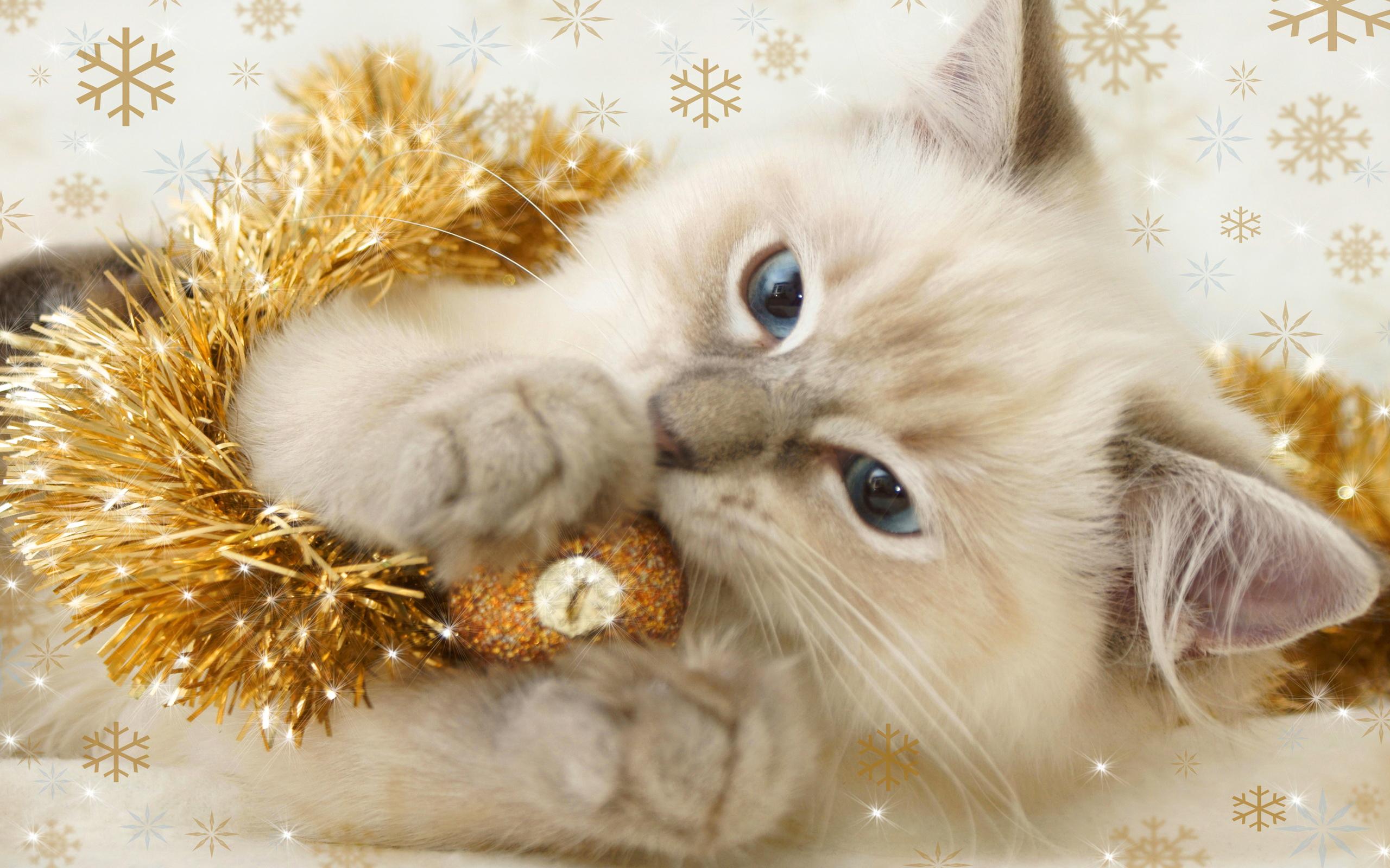 Christmas Kitten   Cats Wallpaper 36711894 2560x1600