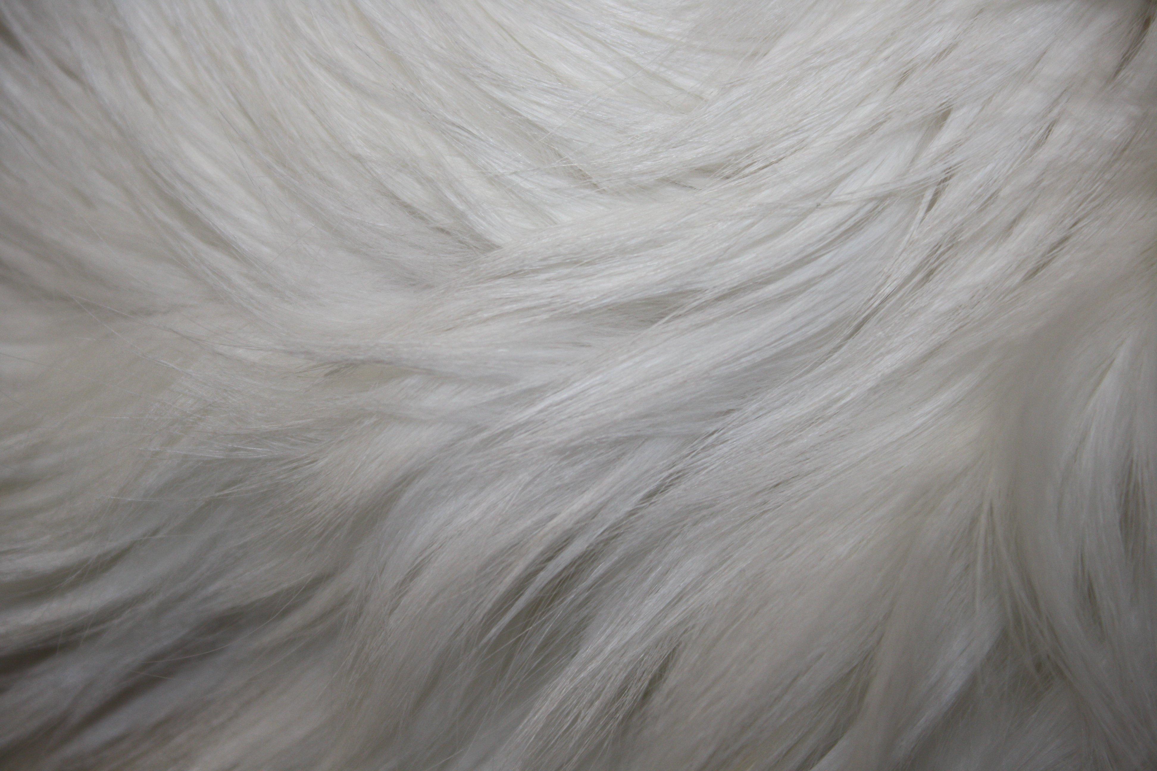 White Fur Texture   High Resolution Photo   Dimensions 3888 3888x2592