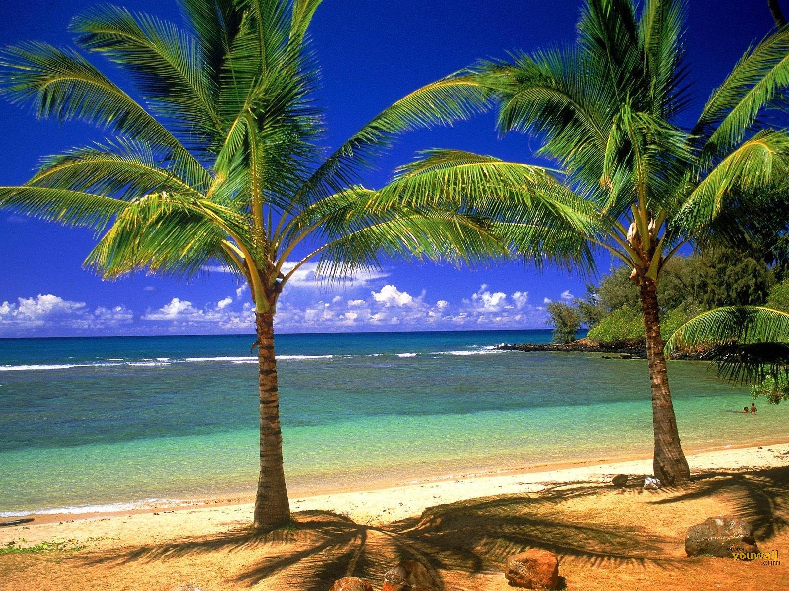 Tropical Beach Wallpaper   wallpaperwallpapersfree wallpaper 1600x1200