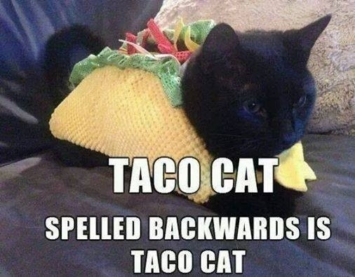 taco bell proposal fail cat roulette web gets posted on the cat mario 506x395