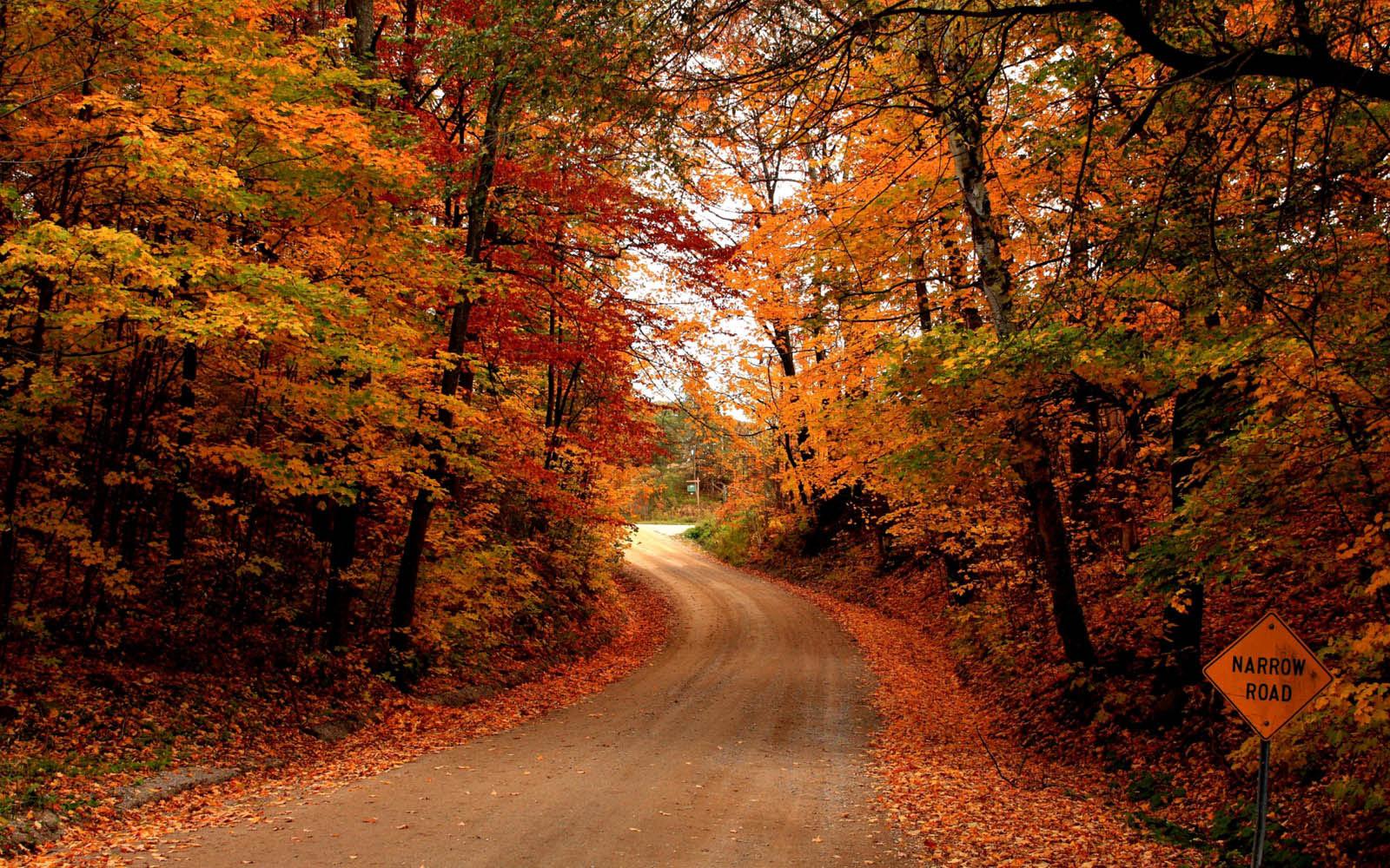 Desktop Wallpapers Autumn Road Desktop Wallpapers 1600x1000
