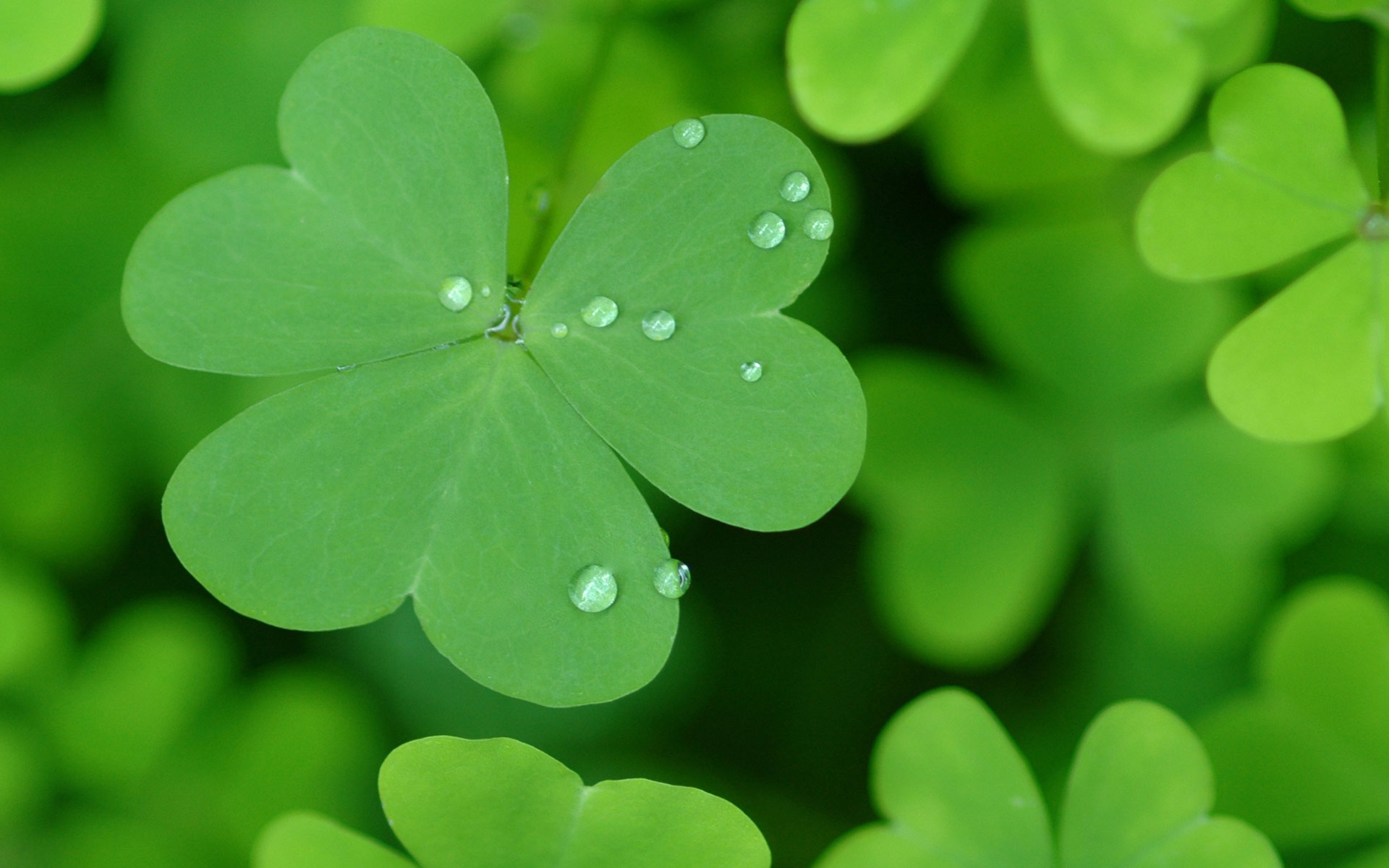 Happy St Patrick's Day 2014 wallpaper - 1294428