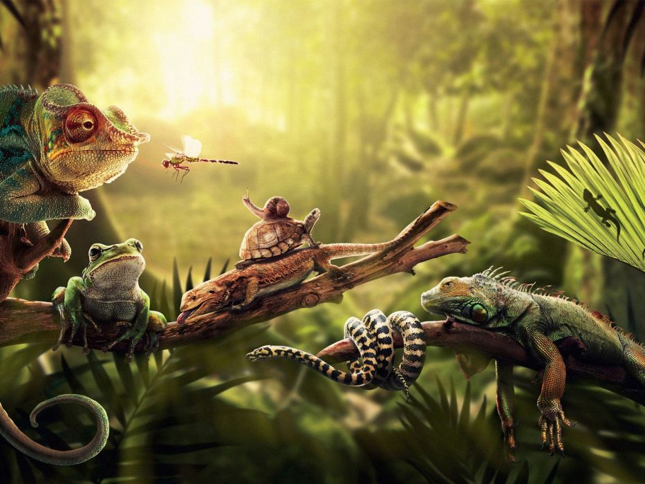 Forests insects chameleons turtles snakes frogs snails reptiles 933x700