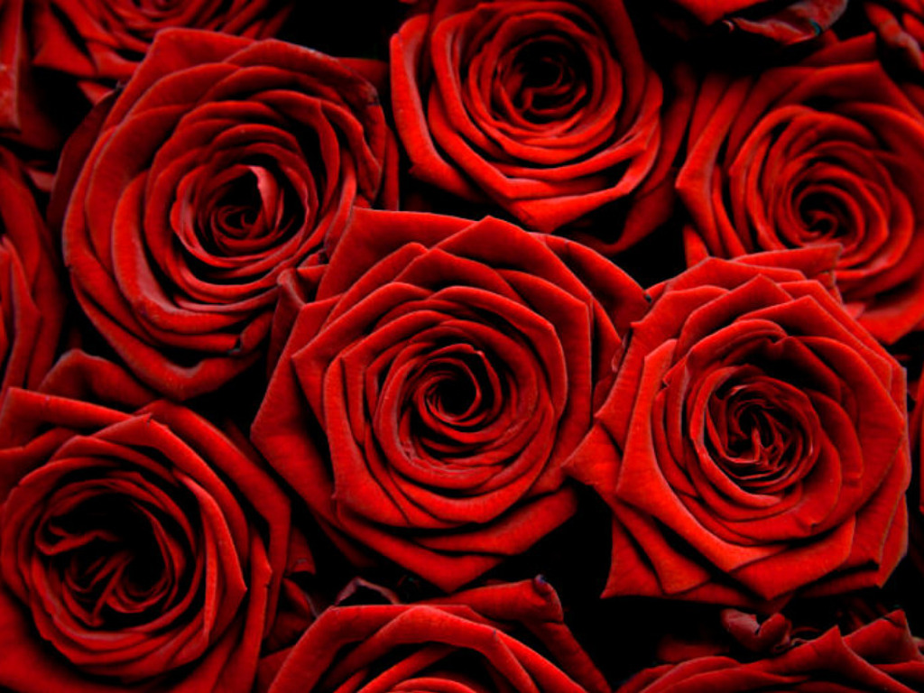 Unique HDQ Images id100582012 Red Roses Wallpaper Backgrounds 1024x768