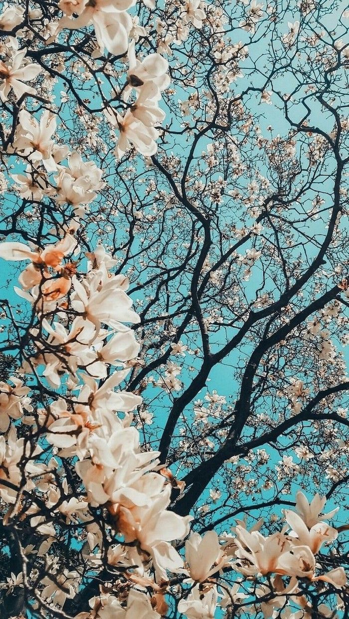 1001 spring wallpaper images for your phone and desktop 700x1241
