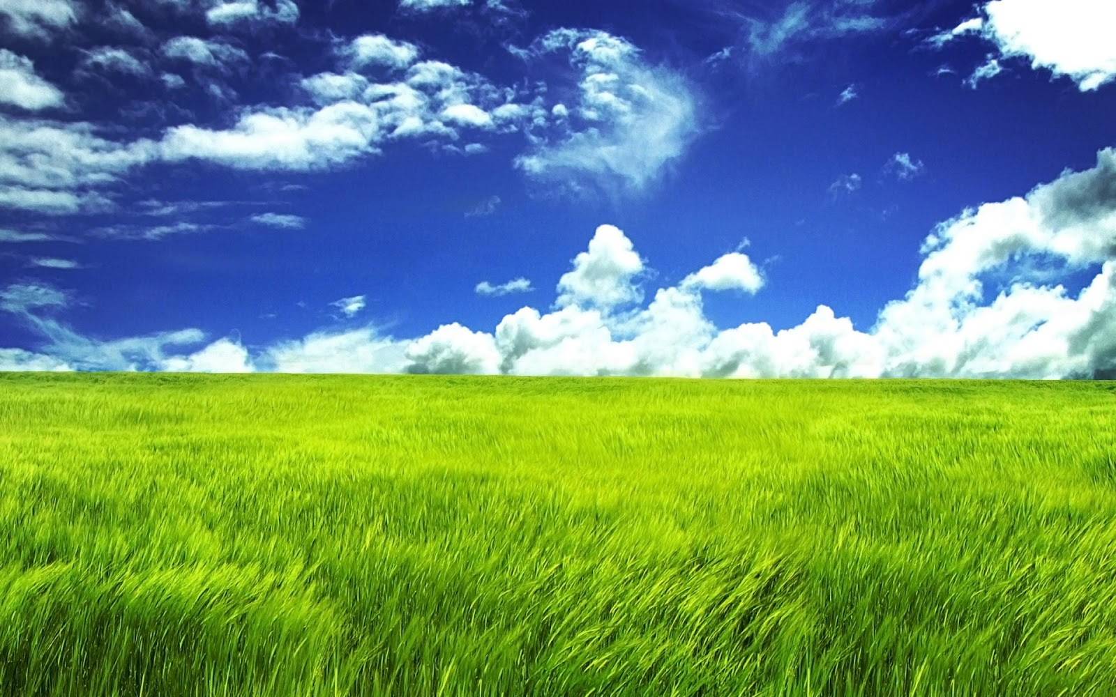 Beautiful HD Wallpapers Amazing Spring Grassland Desktop Wallpaper 1600x1000