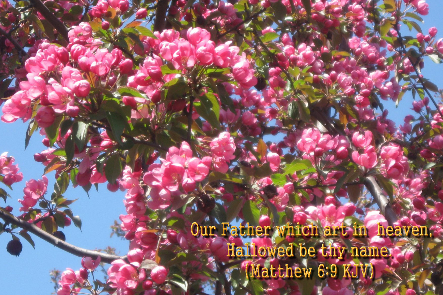 flower blossom wallpaper scripture - photo #1