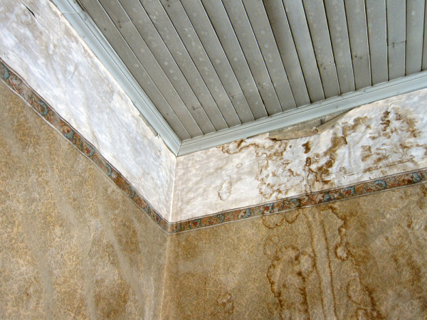 Moldy Wallpaper 600x450