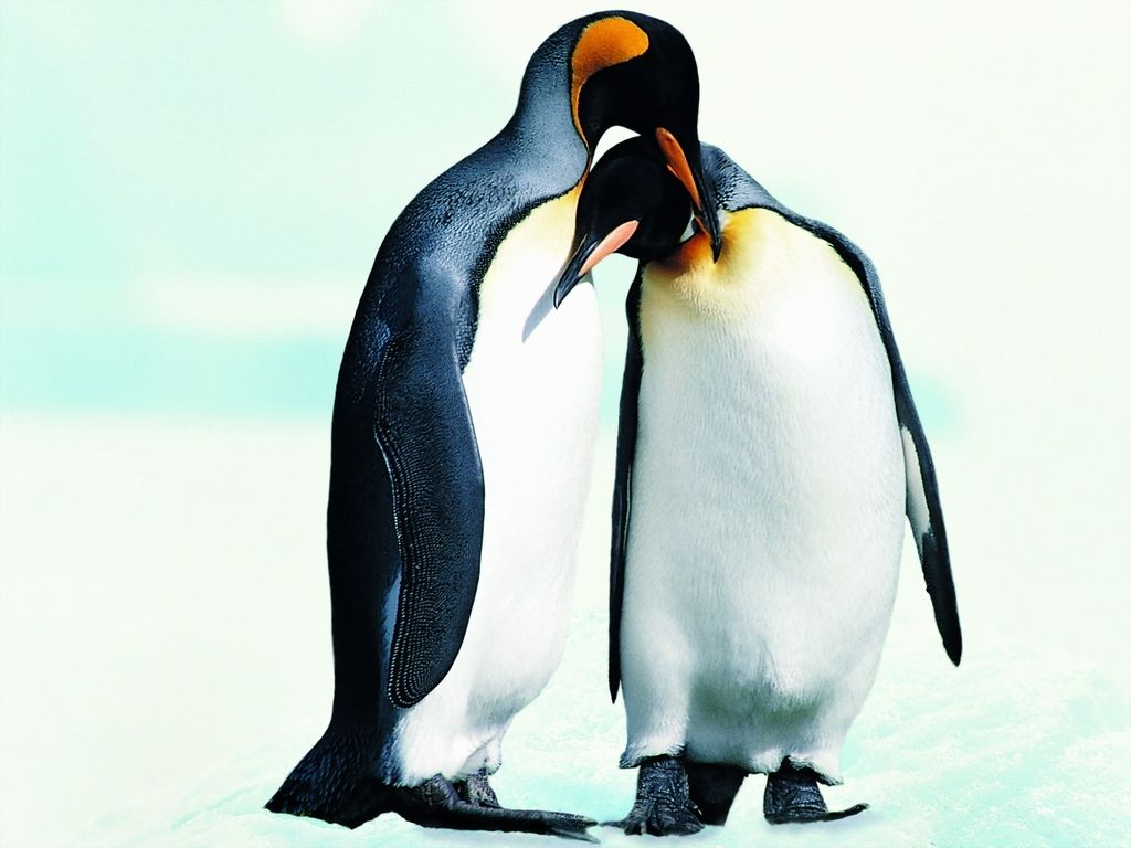 Related wallpapers animals penguins penguin 1024x768