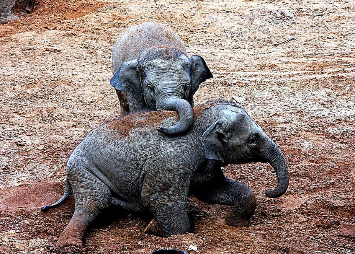 baby elephant desktop wallpaper - wallpapersafari