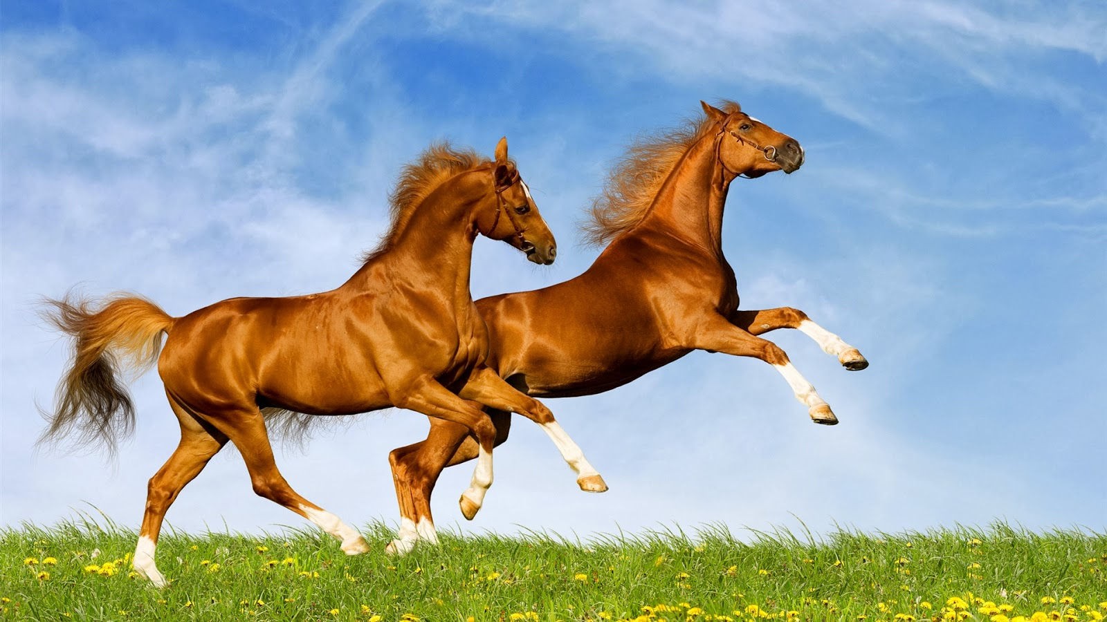 wallpapers desktop horse and make this HD wallpapers desktop 1600x900