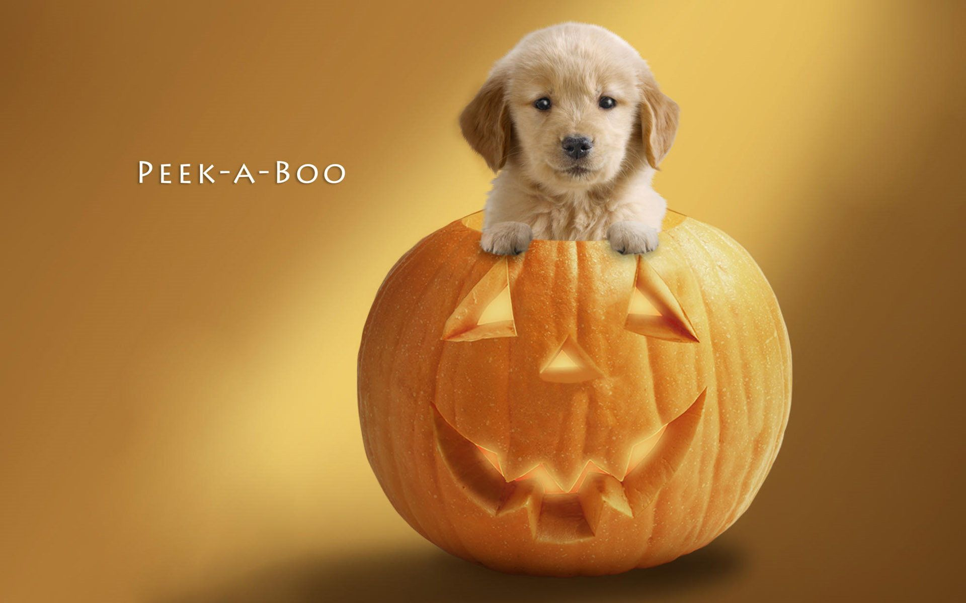 45 Cute Puppy Halloween Wallpapers   Download at WallpaperBro 1920x1200