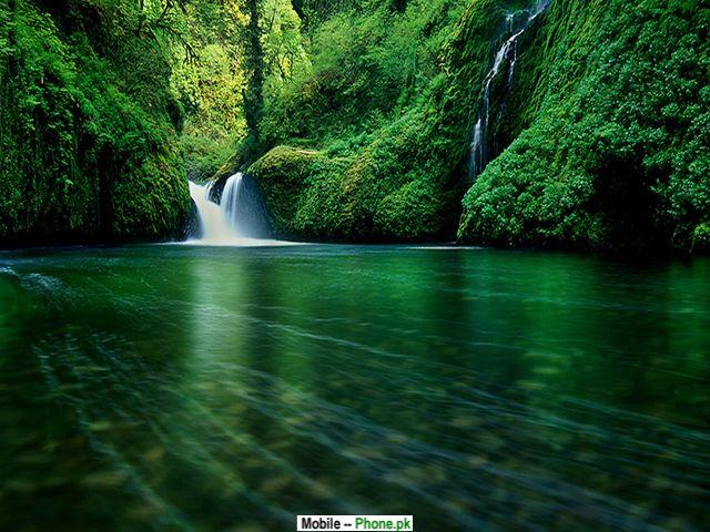 nature greenery t mobile mobile wallpaperjpg 640x480