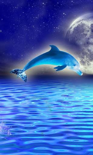 live wallpaper tags rainbow dolphin dolphin rainbow dolphin wallpaper 307x512