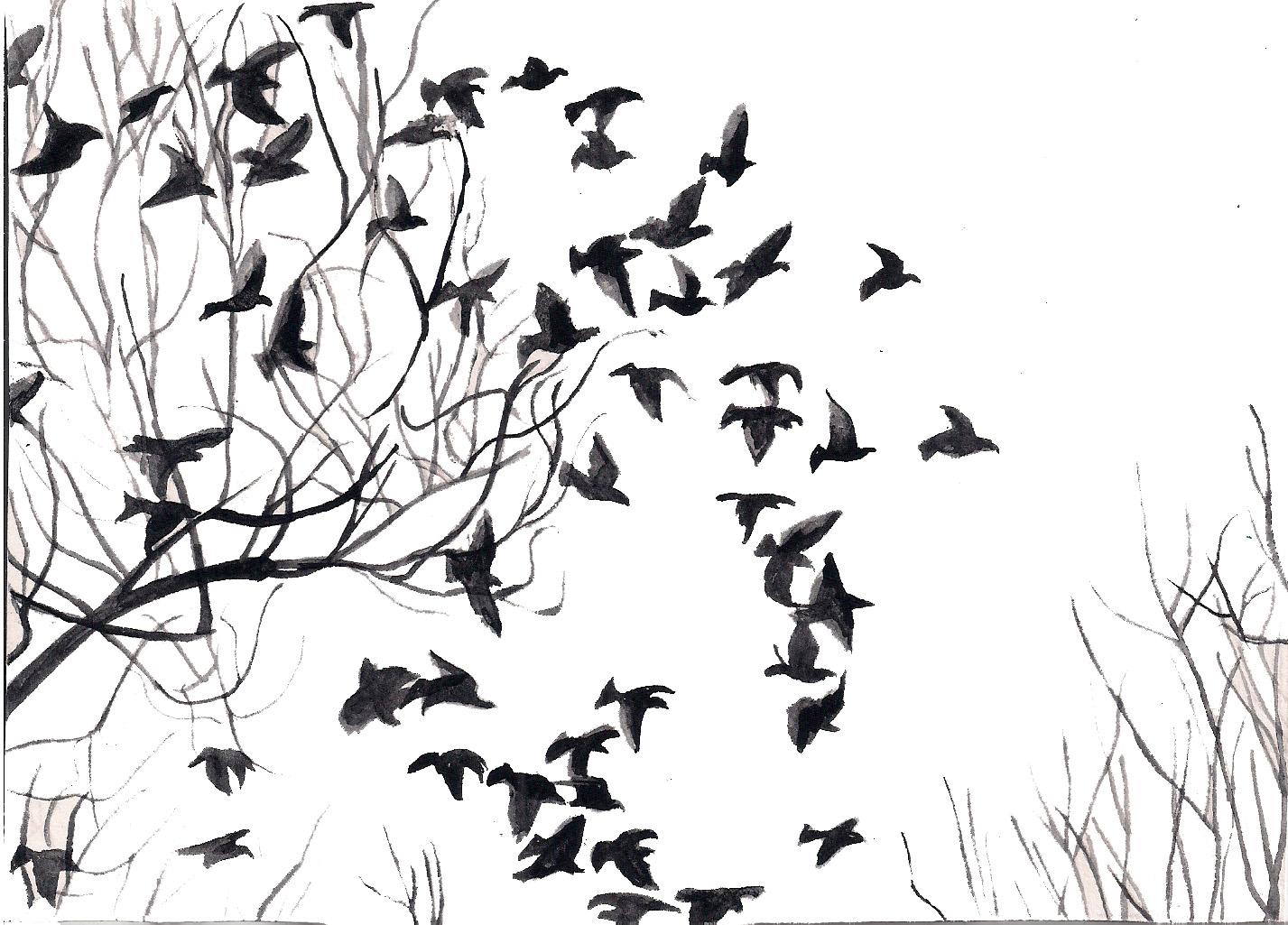 Black And White Bird Wallpaper Wallpapersafari