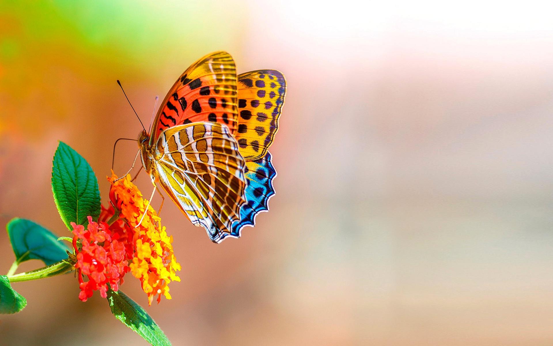 Sweet Wallpaper Butterfly Colorful Digital Hd Sweet 1920x1200