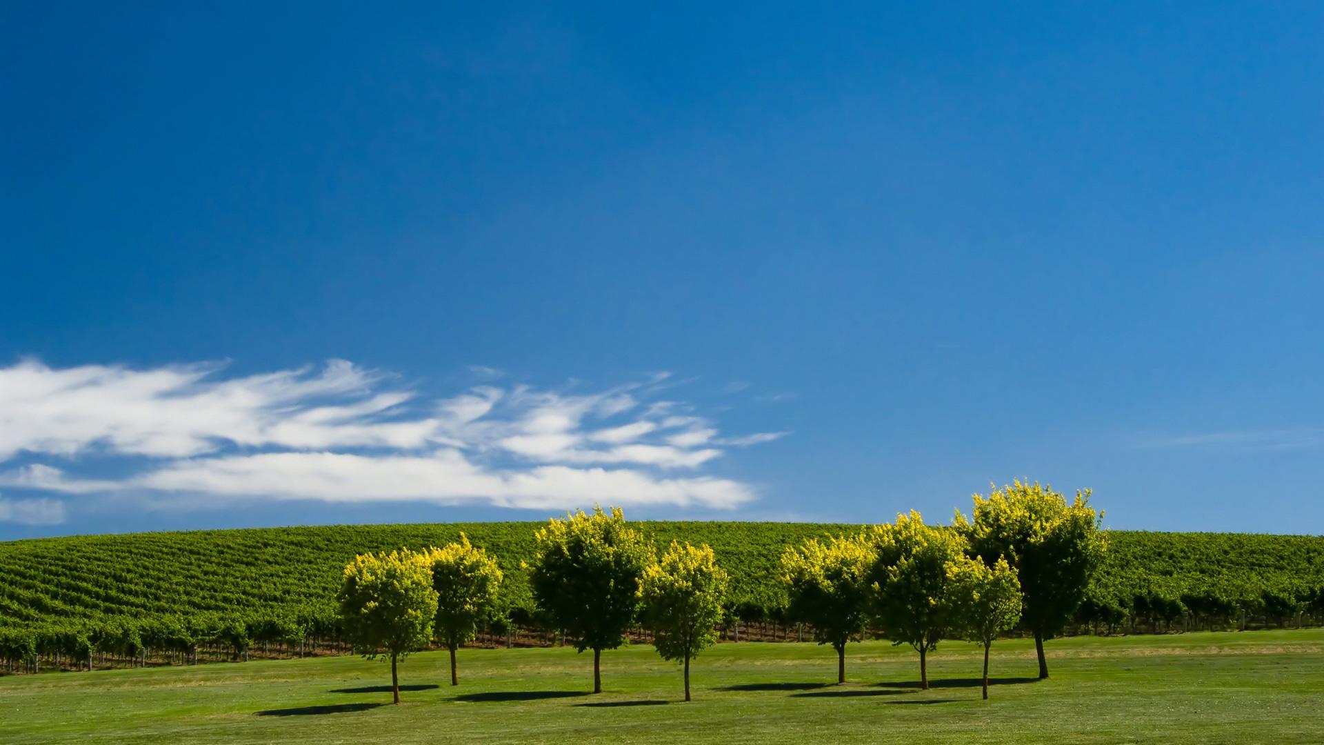Summer Vines   1920x1080   169 1920x1080