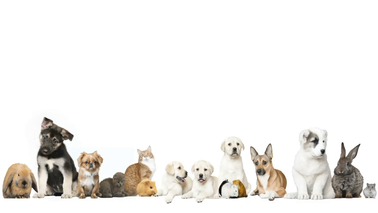 Pets Background   The Y Guide 1280x720