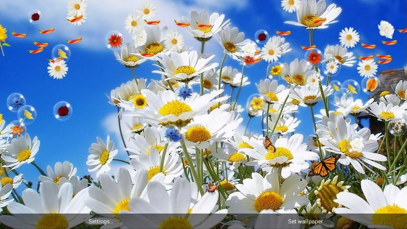 Free download flowers live wallpaper