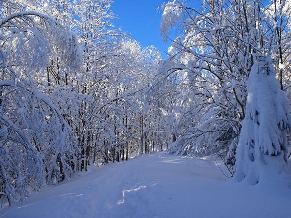 snow forest 1600x1200 wallpaper Snow Wallpapers Desktop 600x450