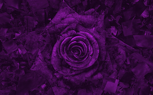 User Cell Phone Wallpapers 7065 Purple Rose 2 Wallpaper 500x313