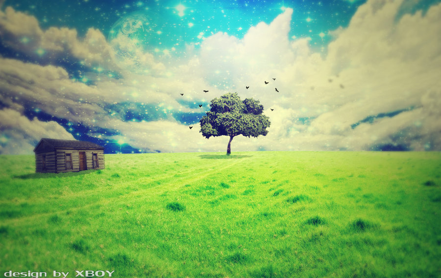 tree of life wallpaper by dragonxboy55 900x568