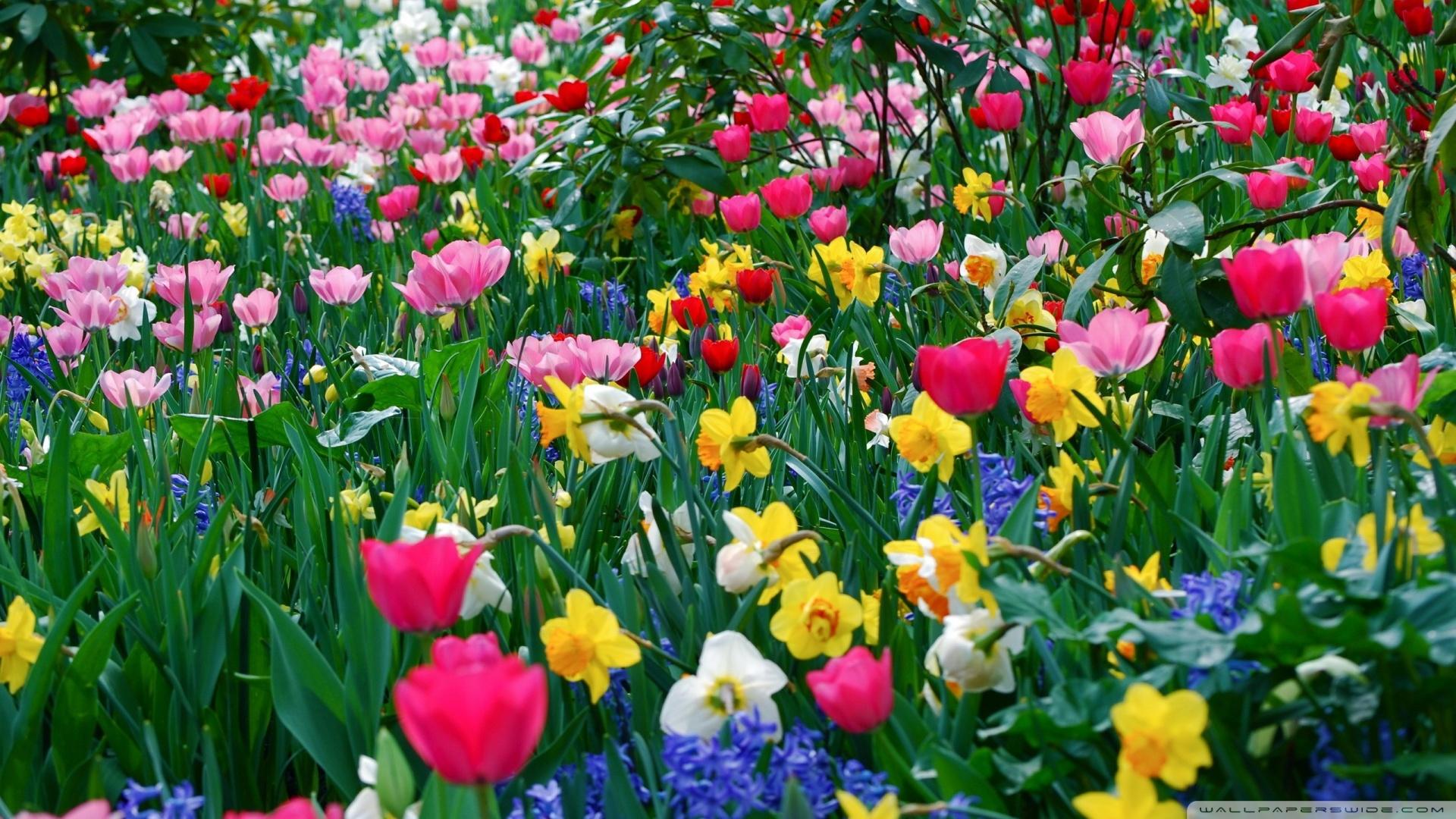 Free Download Spring Flowers Wallpaper 1920x1080 Spring Flowers