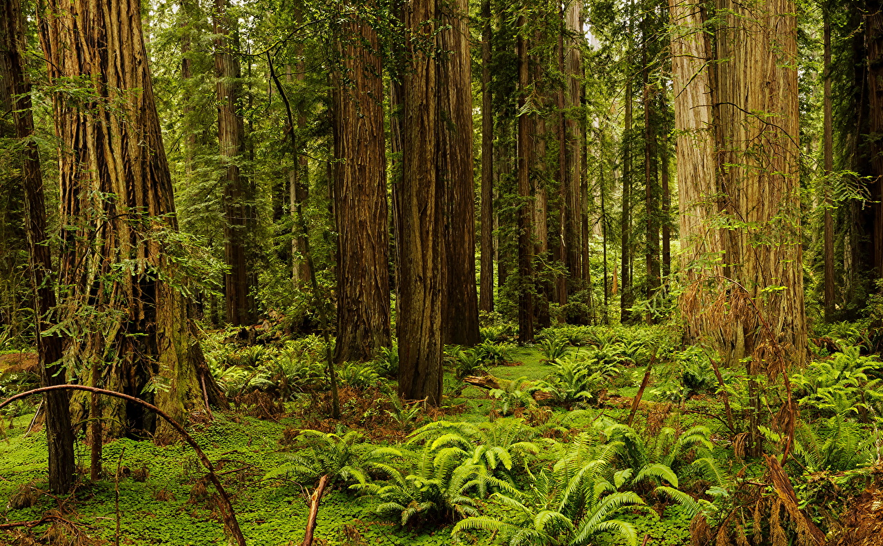 Images California USA Redwood National And State Parks Nature 1280x792