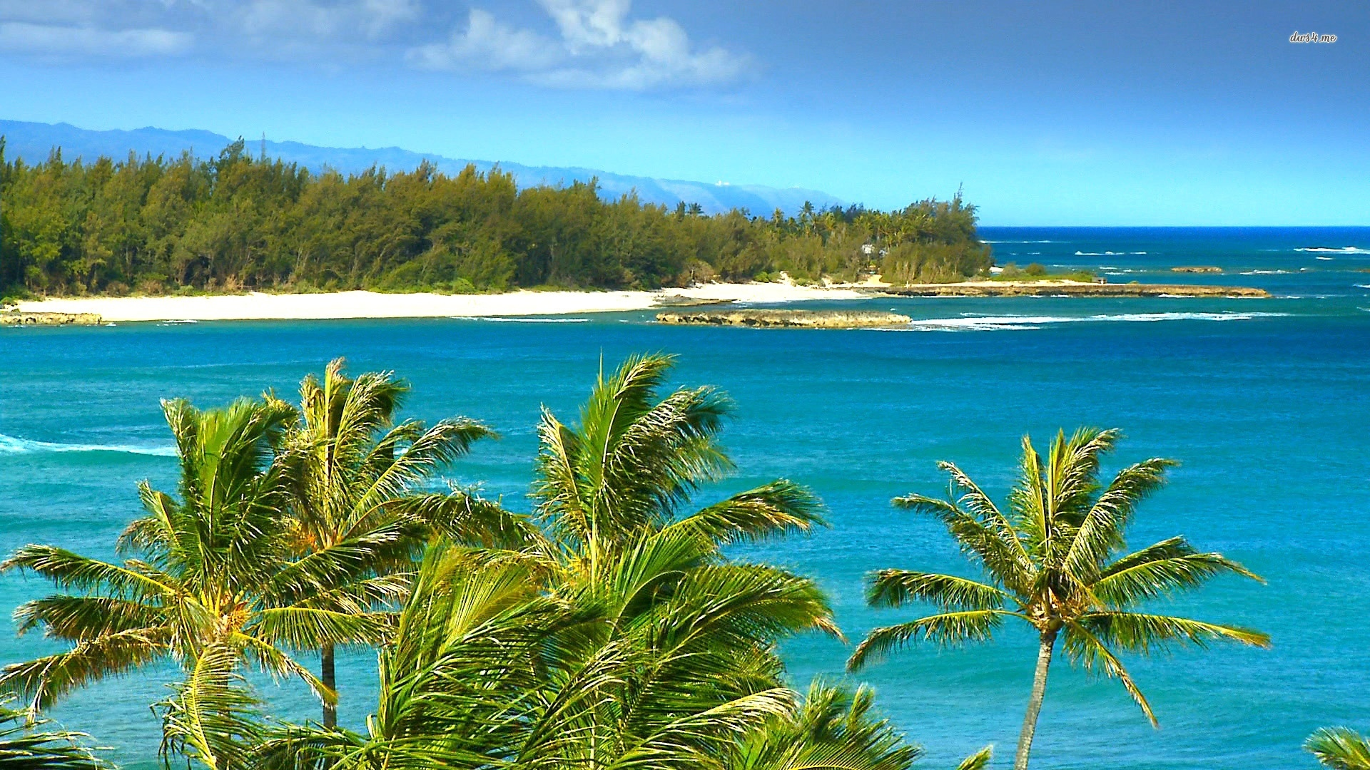 windy beach in hawaii Desktop Backgrounds for HD 1920x1080