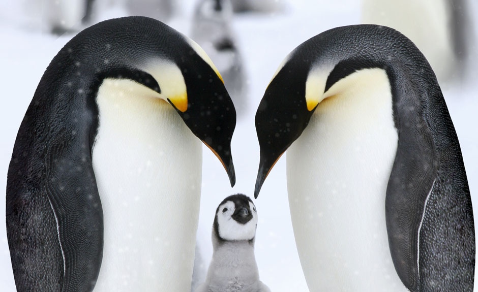 Penguin Love Parallax Wallpaper   UR Customization by UR Browser 940x575