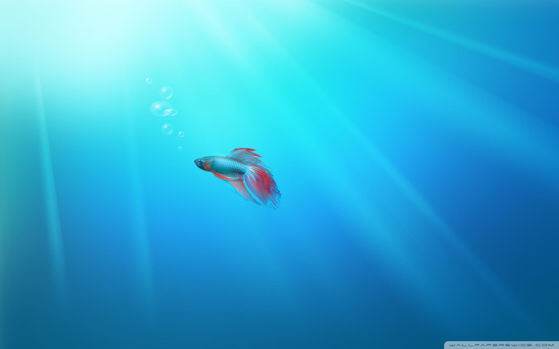 Portada Windows 7 fish hd 1920x1200   Tecnologa   imagenes gratis 1920x1200