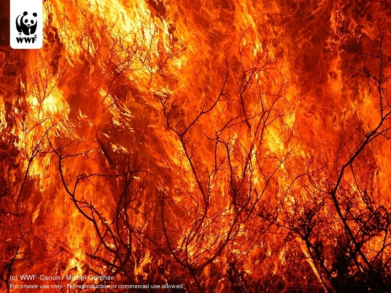 forest fires related software informer wallpapers download photography 800x600